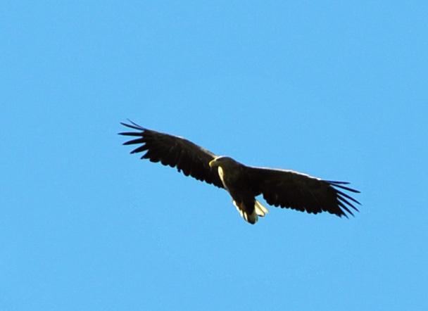Zdjęcie orła