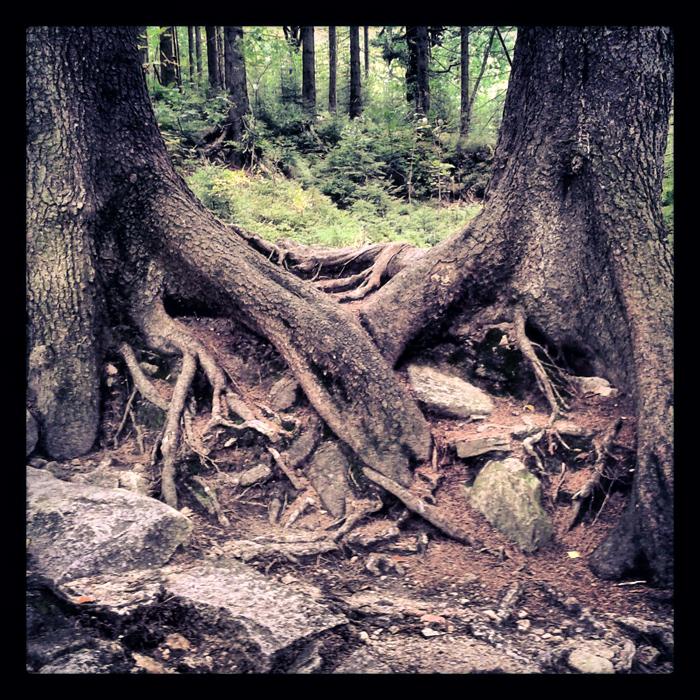 Natura w Karkonoszach