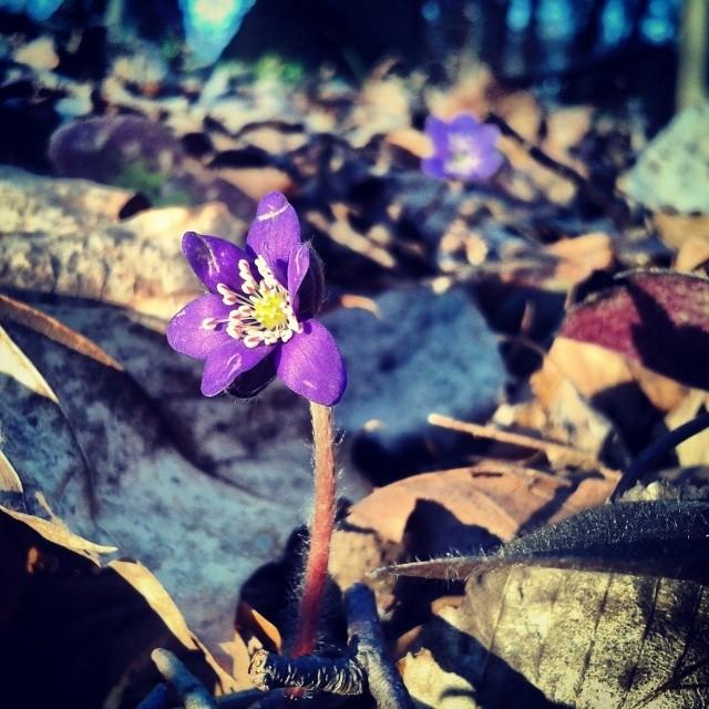 Początek wiosny