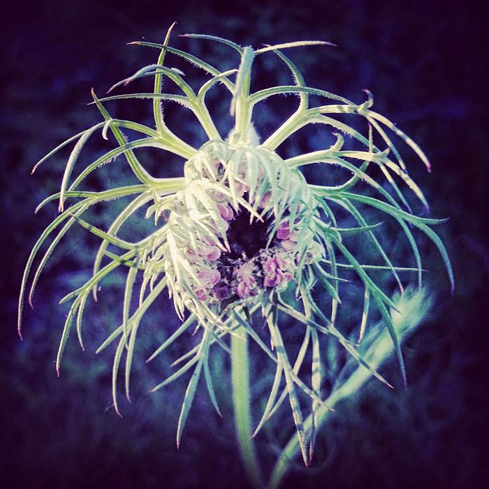Abstrakcyjne zdjęcia roślin