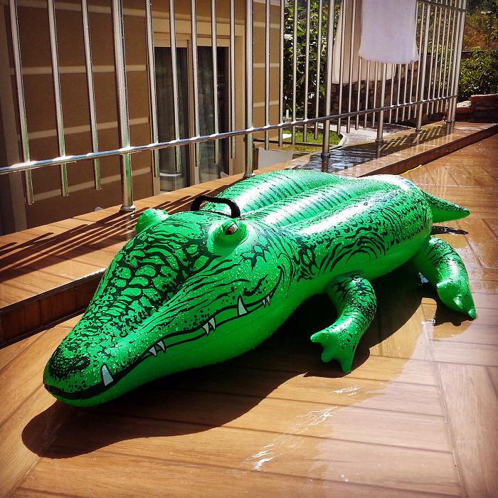Aligator w hotelu