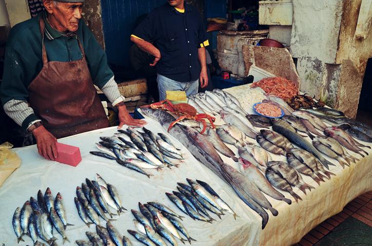 Ryby i inne cuda z wody