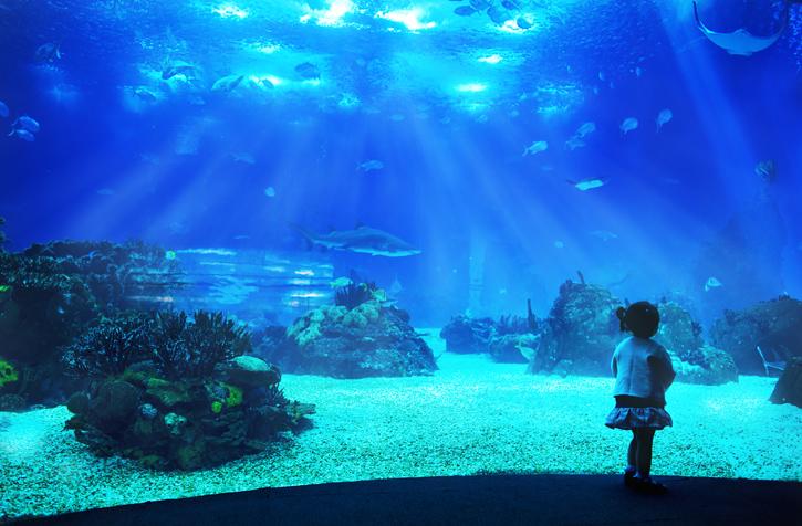Ogromne akwarium w lizbońskim oceanarium