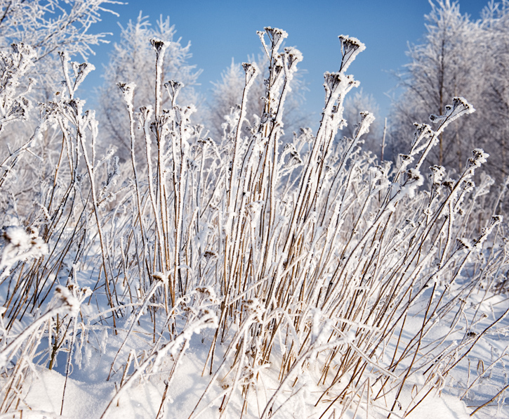 Mroźna, piękna zima