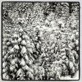 Zimowe fotki