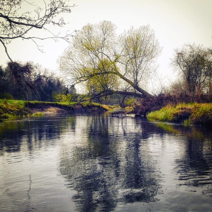 Białowieski Park Narodowy, spływ Narewką