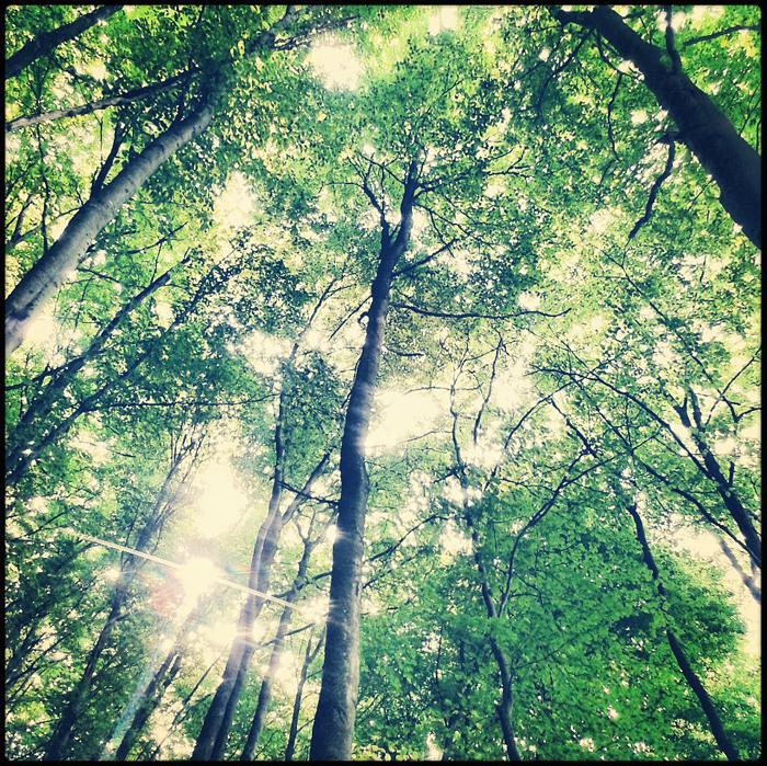 Wiosna w bukowym lesie