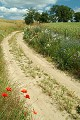 Wiejska droga - pole kwiaty - lato