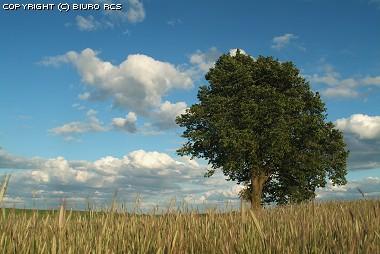 Árvore sozinha