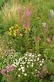 Flores - verano