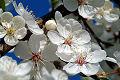Primavera - flores en el �rbol
