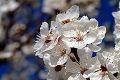 Fotos da primavera