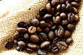 Fotos: Grãos de caf�