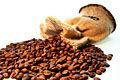 Grãos do caf�