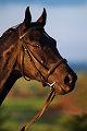 Foto del caballo