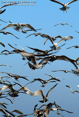 photo of sea-gulls
