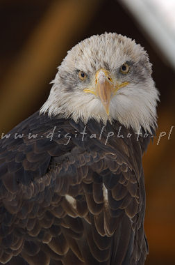 Retrato de Eagel