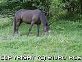 Zdj�cia koni