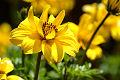Cuadro de la flor del jard�n