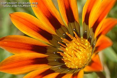 Imagens de flores exotic
