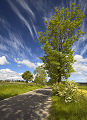 Droga. Krajobrazy wiosenne