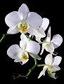 Image des orchidées
