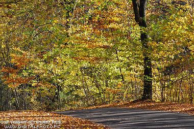 Paisajes del oto 241 o oto 241 o carretera bosque