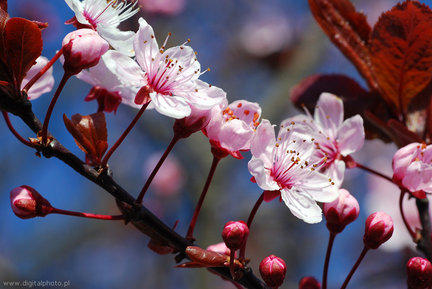Rboles con flores rboles frutales - Arbol de rosas ...