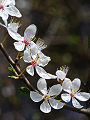 Flores del primavera, �rboles frutals