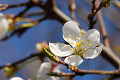 Flor blanca en �rbol en jard�n