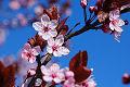 Colores del primavera