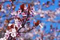 Im�genes  de las cerezas