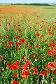 Fotos dos Flores do campo, paisagens