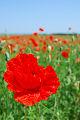 Flores do campo fotos
