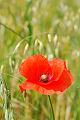 Fotos da natureza, flores