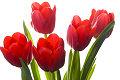 Bukiet kwiat�w