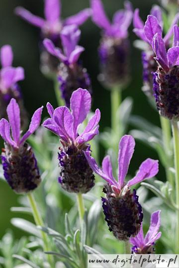 Piante da giardino giardino fiori immagini fotografie for Fiori ornamentali da giardino
