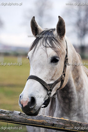 White horse, photos of animals