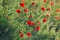 Flores do campo, bouquet