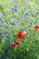 Flores do campo mix