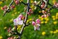 Jard�n, �rboles en flor
