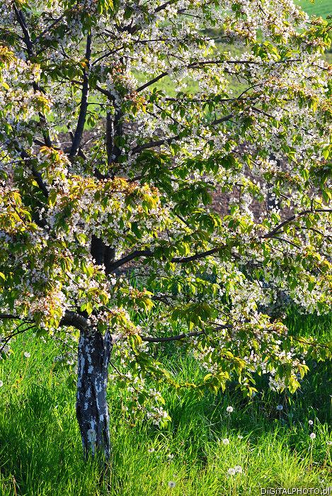 Giardino fiorito fotografie immagini for Foto alberi da giardino