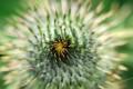 Macrofotografia, Close-up fotografia