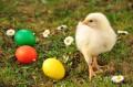 Kurczak ma�y i wielkanocne pisanki
