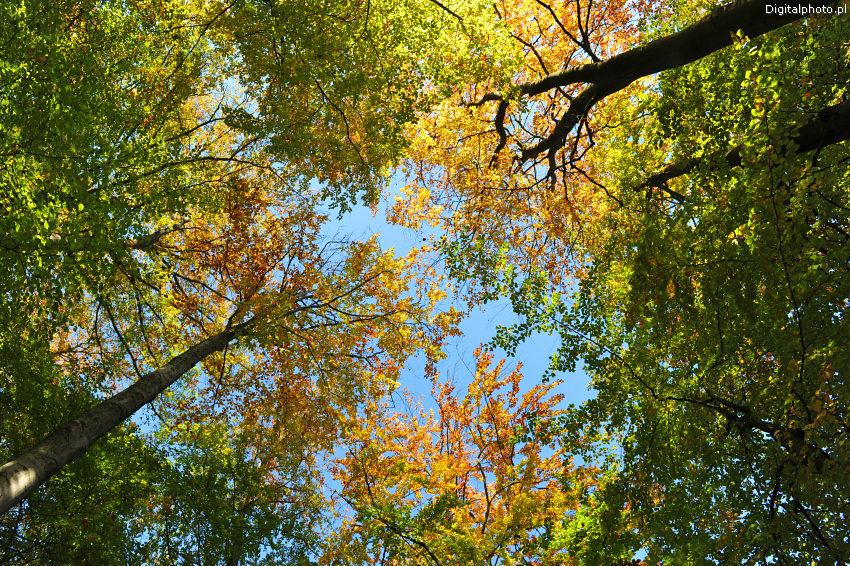 Efterår i skoven, baggrundsbilleder efterår: digitalphoto.pl/dk/billeder/5001