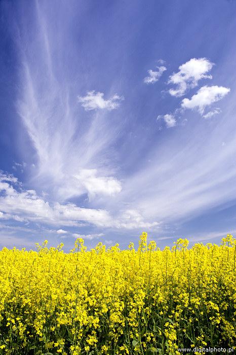 Immagini di paesaggi primaverili fotografia naturalistica for Foto paesaggi gratis