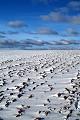 Krajobrazy zimowe - �nieg na polu