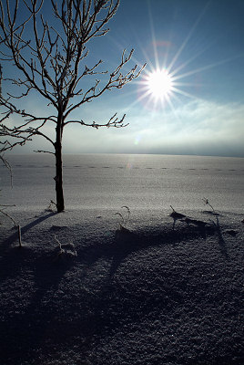Winter landschap, boom