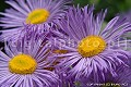 Kwiaty, ro�liny dekoracyjne