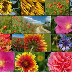 Kwiaty, zdjęcia kwiatów